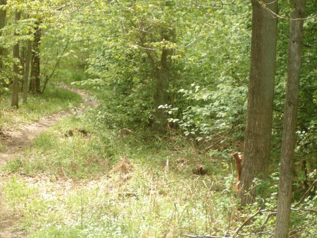 Træer i Bidstrup Skovene med egern